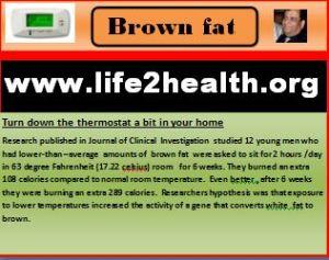 brown fat pic